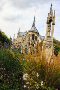 flowers behind notre dame resist the autumn weather urge to wilt
