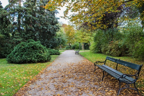 leaves falling on vienna benches