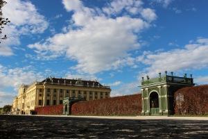 schonbrunn wall ivy