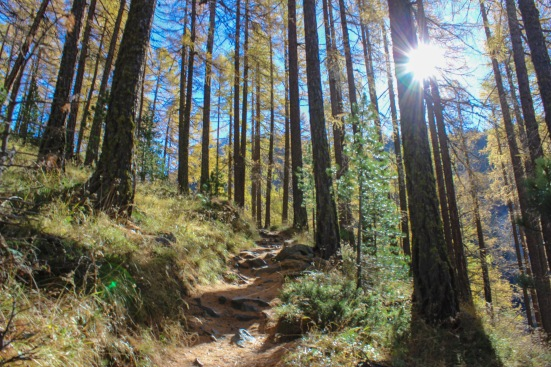 zermatt switzerland forest
