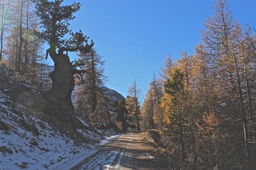 zermatt mountain road