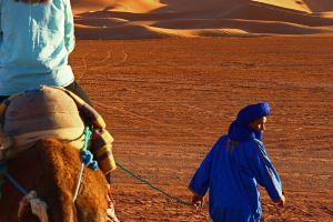 camel whisperer